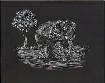 African Elephant by Lisa Guarino