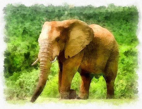 African Elephant by Maciej Froncisz