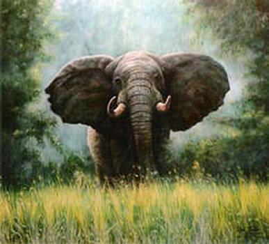 African Elephant by Riek  Jonker