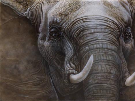 African Elephant by Wayne Pruse