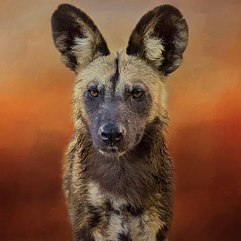 African Wild Dog. by Lyn Darlington