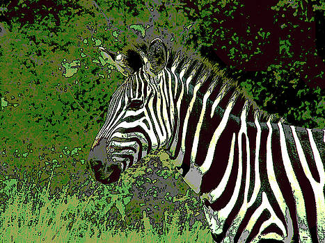African Zebra by Charles Shoup