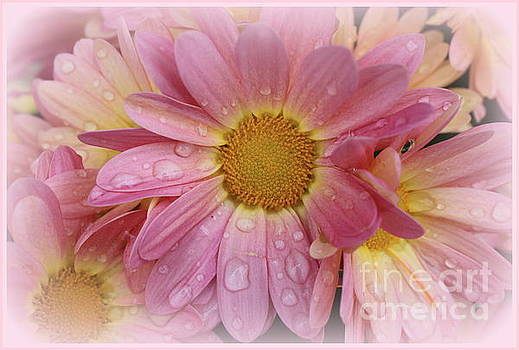 After The Rain - Pink Mums by Dora Sofia Caputo Photographic Art and Design