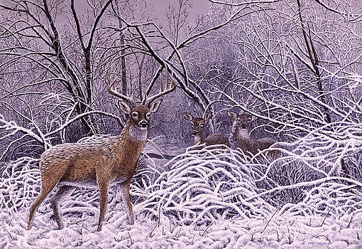 After The Storm - Whitetail Deer by Craig Carlson