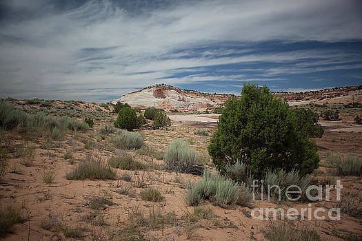 Afternoon Clouds Over White Pocket by Anne Rodkin