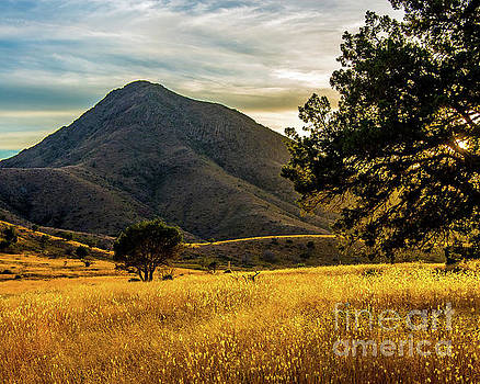 Afternoon Glow by Steve Whalen