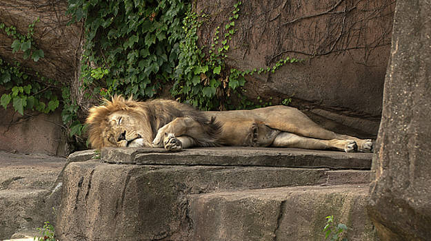 Afternoon Nap Time by Greg Thiemeyer