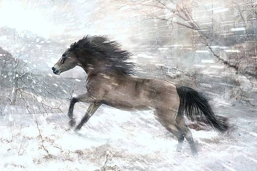 Against The Wind by Dorota Kudyba