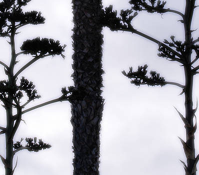 Linda Knorr Shafer - Agave and Palm