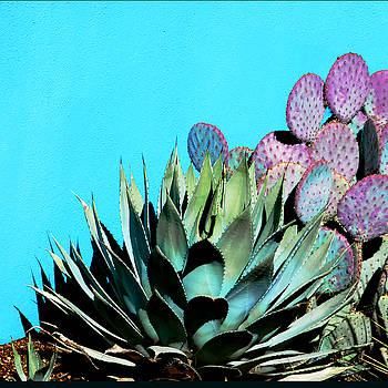 Agave and Prickly Pear Cactus by Marcia Socolik
