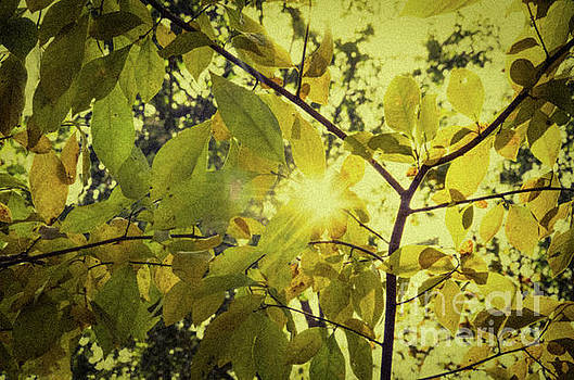 Aged Golden Leaves Nature Photograph by Melissa Fague