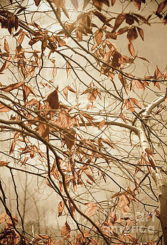Aged Winter Leaves Nature Photograph by Nature Photographer Meli by Melissa Fague