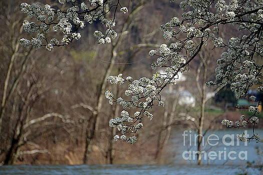 Ah...Spring by Brenda Bostic