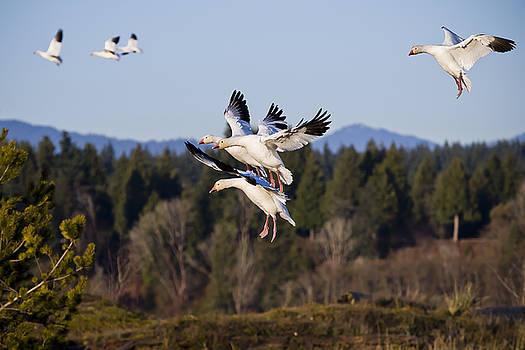 Air Acrobatics by Windy Corduroy
