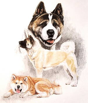 Akita with Ghost by Barbara Keith