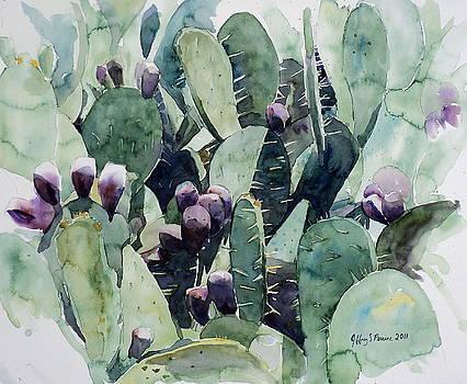 Alamo Prickly Pear by Jeffrey S Perrine
