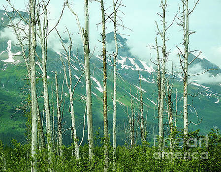 Alaska Landscape by Nick Boren