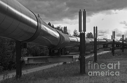 Alaska Pipeline by Robert Pilkington