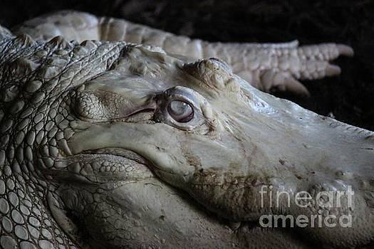 Paulette Thomas - Albino Alligator