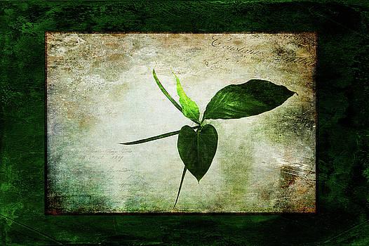 All Green by Randi Grace Nilsberg
