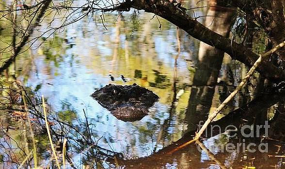 Paulette Thomas - Alligator In The Swamp