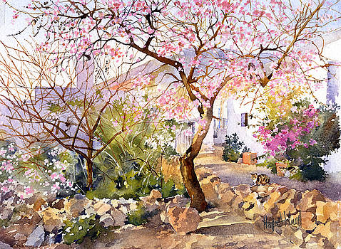 Almond Blossom in Andalucia by Margaret Merry