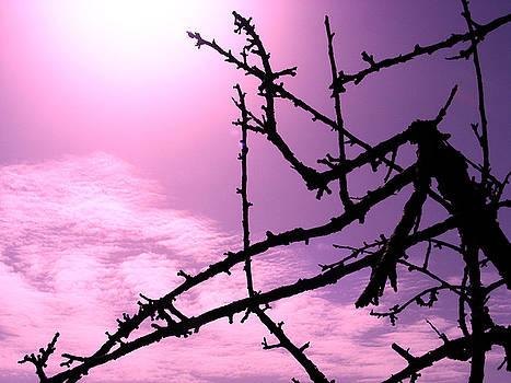 Almond Tree Silhouette by Ingrid Dance