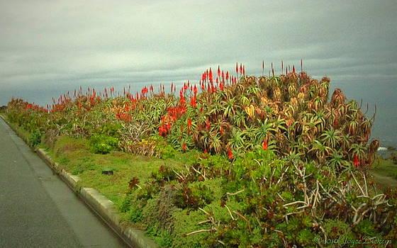 Joyce Dickens - Aloe On Monterey Bay