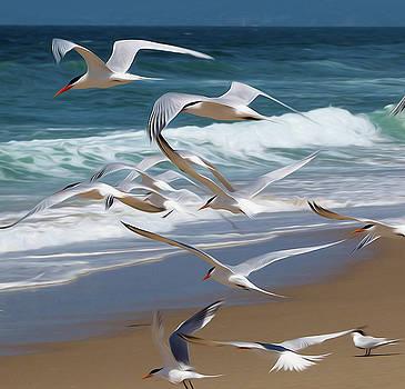 Aloft Again. Terns in Manhattan Beach by Joe Schofield