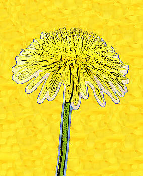 Alone Flower 4a by Bruce Iorio