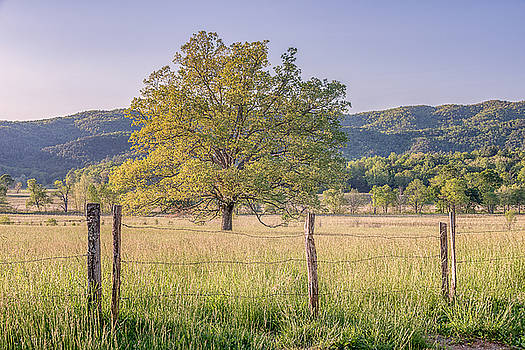 Alone in the Pasture by Jeff Abrahamson