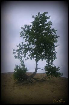 Alone on the Hill by Trina Prenzi