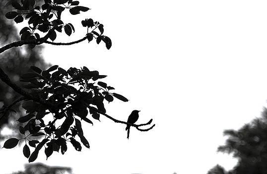 Alone  by Ramabhadran Thirupattur