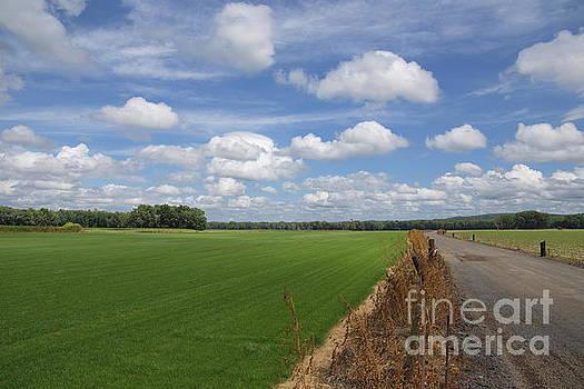 Along the road of the Turf Farm by Marcel  J Goetz  Sr