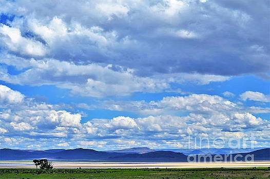 Sky Over Alvord Playa by Michele Penner
