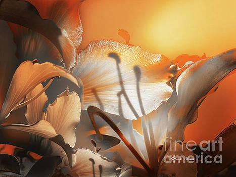 Amanecer  by Alfonso Garcia