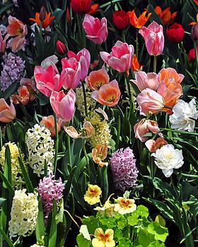 Marty Koch - Amazing Flowers