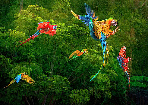 Amazon Macaws by Brian Tarr
