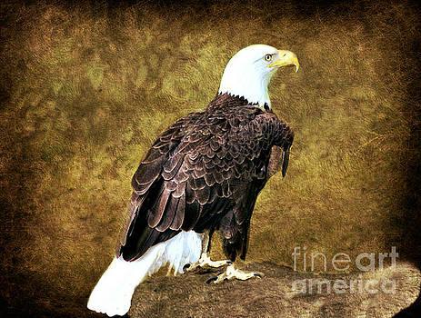 American Bald Eagle by Judy Palkimas