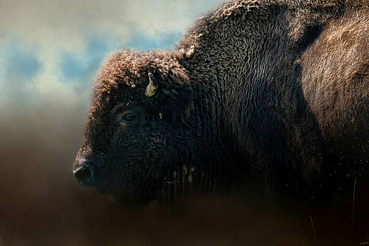 Jai Johnson - American Bison After The Storm