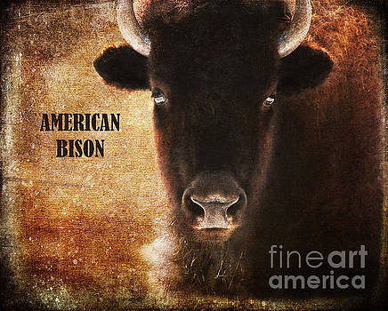 American Bison by Olivia Hardwicke