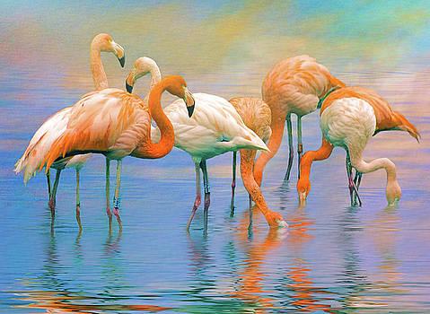American Flamingos by Brian Tarr