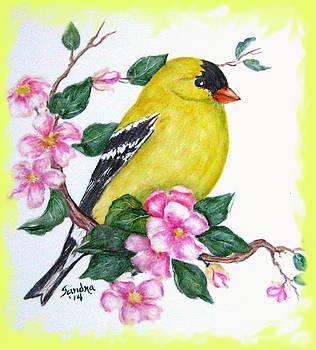 American Goldfinch by Sandra Maddox