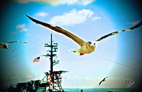 American Gull by Nicole Dumond-Barry