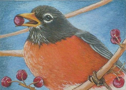 American Robin Eating Berry by Debrah Nelson