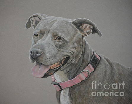 American Staffordshire Terrier by Charlotte Yealey