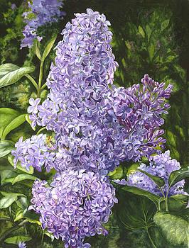 Amethyst Lilac by Helen Shideler