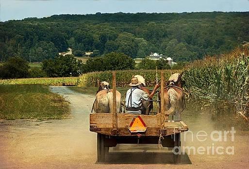 Amish Farmer Three Horses by Beth Ferris Sale