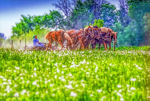Amish Farming by LeeAnn McLaneGoetz McLaneGoetzStudioLLCcom