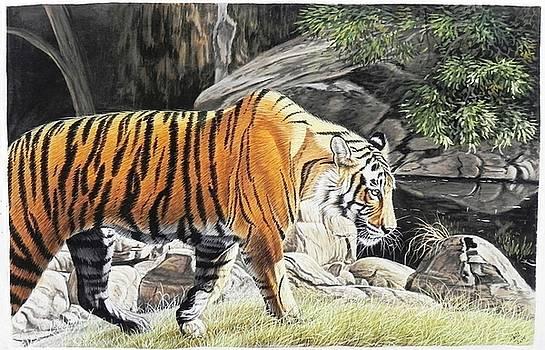 Amit 12 by Amit Kumawat
